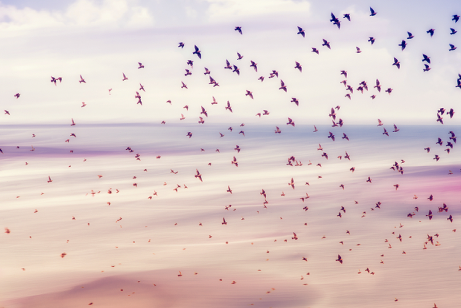 Birds flying away resembling freedom with Spiritual Life Coaching on the beach